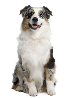 Breeders Online Login Or Register Cats And Dogs
